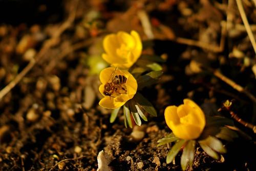 Ein hauch vom Frühling