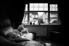 Lazy Sunday (ibriphotos) Tags: hardblend blackandwhite puppy testshot bnw dog nd4 pup lhasaapso ndgrad
