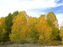 Estampa otoñal en Cuenca (kalima2006) Tags: naturaleza cuenca