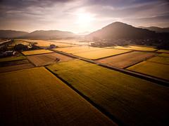 PhoTones Works #7212 (TAKUMA KIMURA) Tags: autumn mountain field japan sunrise landscape scenery rice natural asahi harvest      okayama     phantom3    dji photones