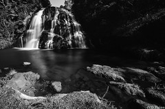 Waitawheta Waterfall (Mr F Ding) Tags: longexposure newzealand blackwhite waterfall nikon stream ngc falls 1224f4