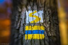 "Am Felix mit dem Lensbaby • <a style=""font-size:0.8em;"" href=""http://www.flickr.com/photos/58574596@N06/22449837688/"" target=""_blank"">View on Flickr</a>"