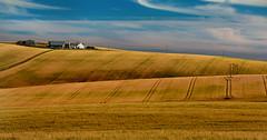 Fields of Gold (Matthias-Hillen) Tags: barley landscape gold scotland highlands aberdeenshire farm united farming landwirtschaft feld felder kingdom highland matthias fields banff landschaft schottland hillen gamrie bauernhaus crovie getreide gerste grosbritanien matthiashillen