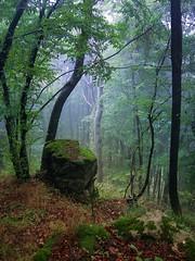 Misty forest (R_Ivanova) Tags: nature forest fall autumn mist colors color red green rock tree blue bulgaria rivanova риванова природа гора мъгла старапланина