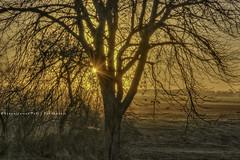 - Dag - (Veronica Van Peet | Photography) Tags: november autumn sun holland tree sunrise landscape herfst boom groningen gedicht ochtend landschap slochteren emotie veronicavanpeetnlwordpress httpswwwfacebookcomveronicavanpeet