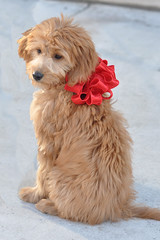 rosie--shes-one-of-molly-and-chewys-little-girls-_4174375502_o