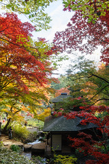 2015-12-06 10-33-47.jpg (d3_plus) Tags: park street autumn autumnfoliage sky building fall nature japan temple nikon scenery wideangle daily architectural historic autumnleaves 日本 nostalgic streetphoto yokohama 紅葉 秋 自然 山 寺 空 oyama 横浜 dailyphoto touring 風景 ドライブ 公園 thesedays superwideangle 神奈川 建築物 景色 歴史 伝統 日常 路上 ツーリング tamron1735 広角 a05 ストリート ニコン tamronspaf1735mmf284dildasphericalif tamronspaf1735mmf284dildaspherical architecturalstructure d700 kanagawapref 超広角 nikond700 tamronspaf1735mmf284dild tamronspaf1735mmf284 路上写真