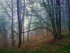 In the forest (R_Ivanova) Tags: nature landscape autumn fall forest mist mountain tree colors color rivanova риванова природа гора мъгла bulgaria
