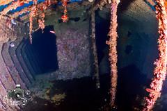 Camp Bay Barge No. 3 (ShaunMYeo) Tags: scubadiving gibraltar wrecks calpe underwaterphotography  gibilterra ikelite artificialreef      gibraltr  cebelitark gjibraltar ibraltaro hibraltar xibraltar giobrltar gibraltrs gibraltaras ibilt            campbaybarges