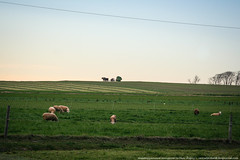 samsebeskazal.livejournal.com-0410.jpg (samsebeskazal) Tags: pennsylvania farm amish lancaster lancastercounty buggy pennsylvaniadutch