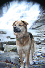 In all his glory (armanda.roco) Tags: winter dog nature animals waterfall outdoor upstateny mansbestfriend ithaca ithacafalls