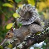 DSC_0078 (2) (kerrywilliams4) Tags: nature wildlife squirrel circle curl swirl
