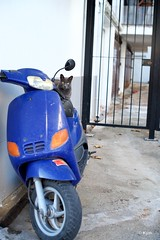 Kitty (Kym.) Tags: andalucía andalusia bike blue cat fence gate kitty nerja orange otherpeoplesgang scooter spain day3