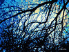 Winter Branchers (Stephenie DeKouadio) Tags: canon art artistic abstract abstractart painting color colour colorful winter branches