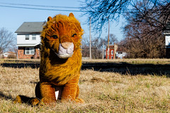 King of North St. Louis (Mike Matney Photography & Design) Tags: 2017 canon eos7d january midwest missouri northstlouis stl stlouis decay urban unitedstates us