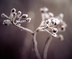 IMG_0008 (outsideartimages) Tags: frost fog winter foliage trees buds moss photography mono bare