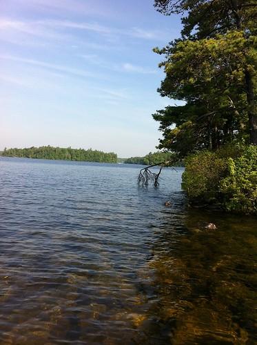 Sebago Lake - www.amazingfishametric.com