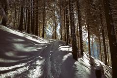in the woods (Toni_V) Tags: m2402915 rangefinder digitalrangefinder messsucher leicam leica mp 28mm typ240 elmaritm12828asph snowshoeing schneeschuhwanderung schneeschuhlaufen hauteroutetösstal zürich zurich zürcheroberland kantonzürich wood forest wald trail wanderweg snow schnee switzerland schweiz suisse svizzera svizra europe ©toniv 2017 170121