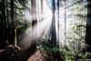 Light on Margaret Way (Mark Griffith) Tags: bulletgorgetrail hike hiking margaretway nikkor1424mmf28 sonya7rii squak squakmountain washington 20161230dsc04370