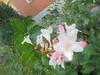 033 (en-ri) Tags: fiorellini little flowers sony sonysti foglie leaves
