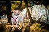 D75_5353.jpg (phil_tonic) Tags: dog animal hund ferddy jackrussell terrier blackandwhite action shot food hunter