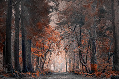 Balloch Park (MarkHarrisPhotography) Tags: woods forest trees nature scotland autumn nikcollection balloch woodland path