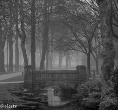 Here Comes the Fog! (ako_ni) Tags: fog morningshot foggymorning winter wintersfog arboretum walsallarboretum park trees nature naturephotography naturalphenomenon landscapephotography landscapebeauty mystical dreamy canoneos450d sigma1770mm lowkey bw blackandwhite landscape