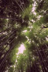 Arashiyama bamboo forest, Kyoto . XT1 . (AKromatiCK) Tags: kyoto x20 fujifilm fuji japon japan arashiyama bamboo forest