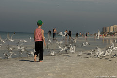 A Boy, Beach, and Birds (David J. Greer) Tags: clearwater beach florida gulf coast young boy male bird birds chase morning ocean sea water people walk walking warm bright landscape outdoor
