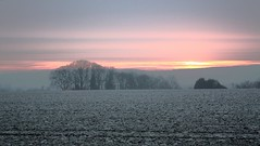matin brumeux // misty morning (~Laurence~) Tags: gel hiver brume champs arbres campagne paysage landscape canon canonflickeraward worldtrekker leverdesoleil