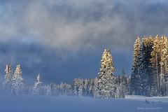 Winter Storm Approach (Amy Hudechek (Happy Photographer)) Tags: winter storm fog snow grandmesa colorado trees nature landscape light clouds