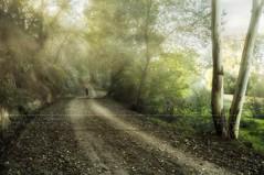 Niebla en la ribera (José Luis Pérez Navarro) Tags: árboles arbol tree trees camino mujer woman sunset atardecer otoño autumn rayosdeluz joséluispérez blacky2007 nikon d90 marmolejo jaén españa spain andalucía rural airelibre paseo