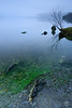 Blue / Green Algae - Loch Lomond, Scotland (Renegade Scot) Tags: landscape lomond loch scotland scottish water nature lake trossachs view clouds rural travel tree sky calm reflection outdoor blue milarrochy lochlomond reflectioninwater scenerylandscape shore photography reflections landscapebackground trees island mist misty foggy islands tranquil benlomond shingle green algae shoreline