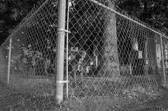 Dogs of Roosevelt Park Pt2 (the young pretender) Tags: street white black dogs animals fence san texas streetphotography antonio rooseveltpark