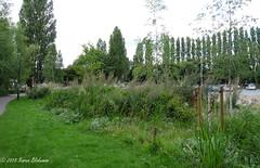 Wild life area developing next to Hills Meadow car park (karenblakeman) Tags: uk plants august wildflowers caversham 2015 hillsmeadow