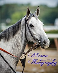 Hard Not To Like (EASY GOER) Tags: horses horse ny newyork sports race canon track running racing 5d athletes races thoroughbred equine markiii