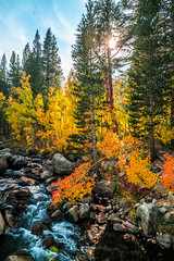 Sony A7R2 California Fall Colors Autumn Foilage Fine Art High Sierras! Dr. Elliot McGucken Sony FE 24-240mm f/3.5-6.3 OSS Lens SEL24240 Fine Art Landscape & Nature Photography (45SURF Hero's Odyssey Mythology Landscapes & Godde) Tags: california autumn art fall nature colors k creek lens landscape photography high dr sony fineart fine wideangle r sierras fe elliot foilage bishop a7 fineartphotography naturephotography oss wideanglelens naturephotos mcgucken bishopcreek f3563 fineartphotos a7r fineartphotographer bishopcanyon fineartnature elliotmcgucken elliotmcguckenphotography elliotmcguckenfineart 24240mm a7rii sel24240 a7r2 masterfineartphotography northlakefork southlakeforkeasternsierras