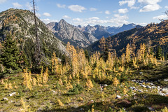 20151003-IMG_9874 (Ken Poore) Tags: washington hiking cascades larches northcascades geolocation maplepassloop geocity camera:make=canon exif:make=canon goldenlarches geocountry geostate exif:lens=ef24105mmf4lisusm exif:focallength=24mm exif:aperture=ƒ80 exif:model=canoneos6d camera:model=canoneos6d exif:isospeed=100 geo:lon=12076598166667 geo:lat=48508603333333
