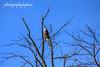 Glenwillow Bald Eagle (rikki500) Tags: trees ohio usa fall birds photography unitedstatesofamerica baldeagles canonrebelxti glenwillow photographybybuzz