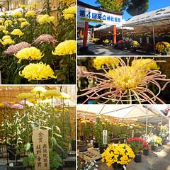 _Walkerplus (noishi_d) Tags: voyage trip travel viaje tourism japan sightseeing saitama  viaggio reise     1300mm 15cm     2015 3    walkerplus