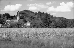 Champs de mas (stephphoto8184) Tags: nature noir champs et blanc mas hauterives