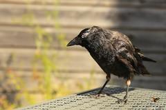 Photo of bird on a table