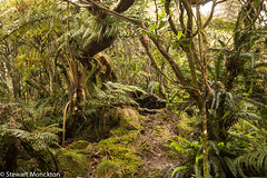 A wet day on Mt. Gower (Stewart M) Tags: walk australia lordhoweisland 2015 lhi hli mistforest mtgower