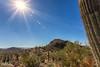 IMG_6273-Bearbeitet (dominikborsch) Tags: tucson arizona usa saguaros saguaronationalpark nature nationpark landscape landschaft desert wüste kaktus cactus