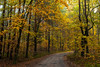 Get Lost (Łukasz Babula) Tags: poland autumn fall forest wood woods tree trees foliage leafs calm peaceful morning road trail path orange red yellow green nature natural landscape outdoor plant serene nikon d60 nikkor 1855 october