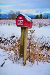 Wintery Scene in Pitt Meadows, BC (spetersonphotography ★★Happy New Year!★★) Tags: pittmeadows pittpoulder landscape farm farmhouse barns britishcolumbia canada mountains snow nikond5200 nikon mailbox sign barn snowylandscape