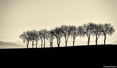 Les arbres (ppichard) Tags: lauragais nailloux