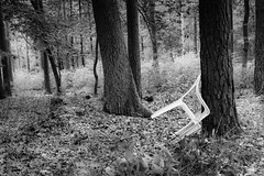 Stuhl im Wald (joerg.busack) Tags: chair landscape landschaft wald farn gardenchair baum fern gartenstuhl forest kiefern wood stuhl pines bw bäume tree sw