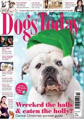 Dogs Today Dec 2016 (Penelope Malby Photography) Tags: frontcovers covers covershots penelopemalbyphotography dogphotography surreydogphotography ukdogphotographer dogsmonthlymagazine dogstodaymagazine coverphotographer gallery4 bulldog bentleythebulldog alapahabluebloodbulldog alapaha bluebloodbulldog christmasdog