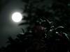 雪月花 (kokemomiji) Tags: snow moon flower night winter 雪月花 olympus omd em1 mark2 markii mzuiko 75mm f18